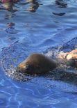 Kourtney Kardashian Bikini Candids - Rides a Sea Lion in Mexico, January 2014