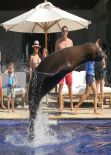 Kourtney Kardashian Bikini Candids - Rides a Sea Lion in Mexico, January 2014