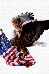 Wolf-Pasticcio-1051-4th-Of-July-Eagle