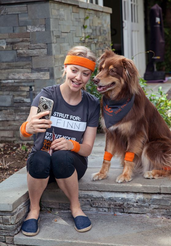 Amanda Seyfried - With her Australian Shepherd Dog Finn, as she Campaigns to Save the Lives of Shelter Pets, June 2016