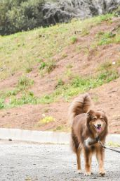 Amanda Seyfried - Takes Her Dog For a Walk in LA 2/21/ 2017