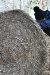 Summer Monteys-Fullam - Pushing a Heavy Bale of Hay in Canterbury 12/28/2020