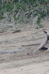 Katy Perry in a Purple Swimsuit at the Beach in Hawaii 02/20/2021